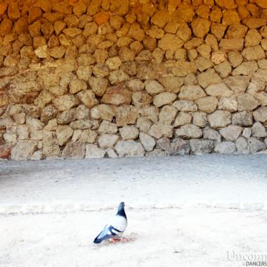 Uncommon bird